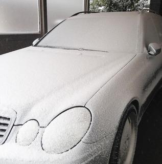 雪がとけました